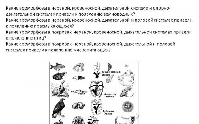 1)Какие ароморфозы в нервной, кровеносной, дыхательной системе и