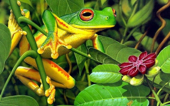 Амфибии: Факты о ночной жизни рептилий , Класс земноводные