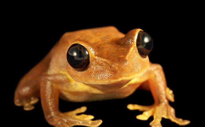 Амфибии, или Земноводные (Amphibia), внешний вид, покровы, окрас
