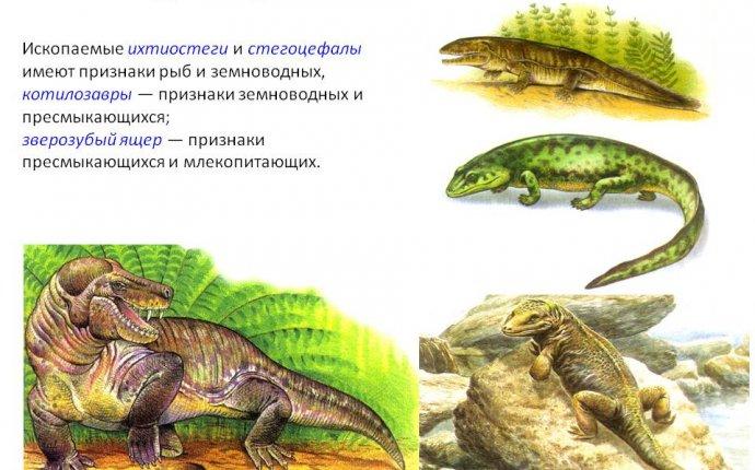 Данные сравнительной палеонтологии - Картинка 13937-30