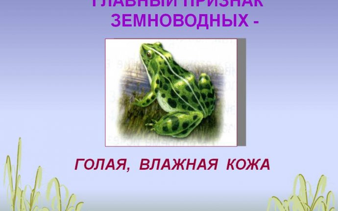 Главный признак земноводных - 23030-15