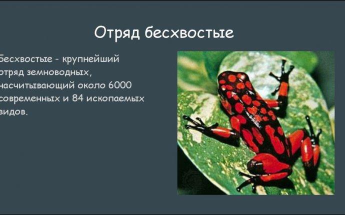 Хвостатые и бесхвостые земноводные - презентация онлайн