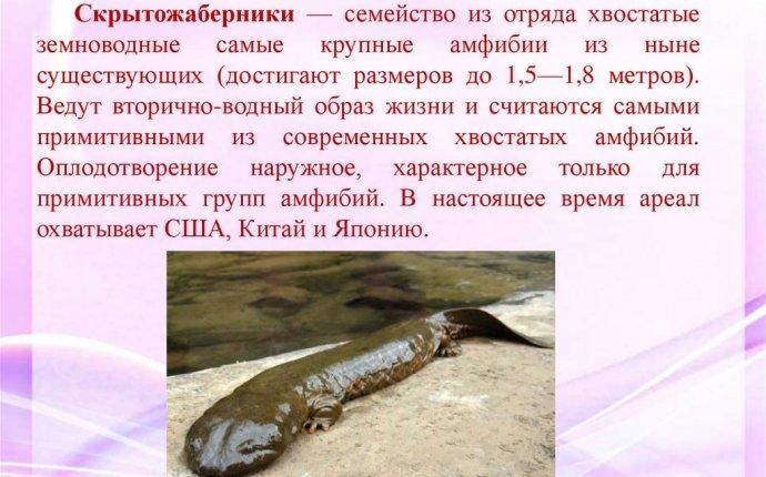 Многообразие и значение земноводных - презентация онлайн