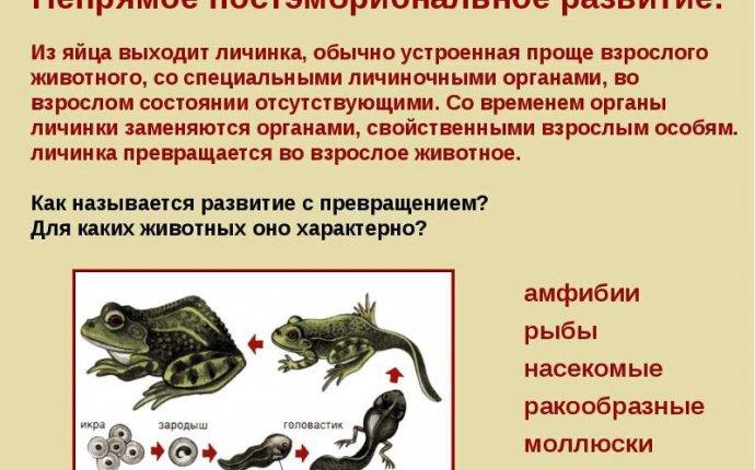 Ответы Mail.Ru: Каковы различия между прямым и непрямым развитием