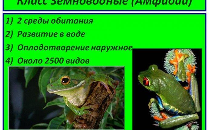 Презентация на тему: Класс Земноводные (Амфибии) 1)2 среды