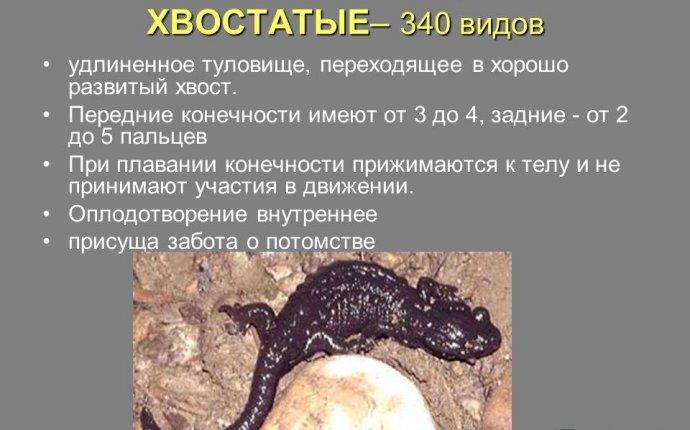 Презентация на тему: Многообразие земноводных отряд Безногие
