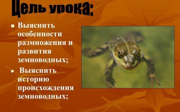 Презентация на тему: Выяснить особенности размножения и развития