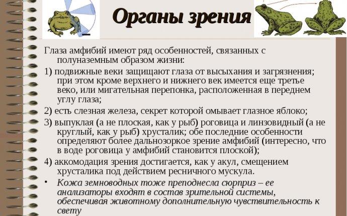 """Презентация по биологии на тему """"Земноводные"""""""