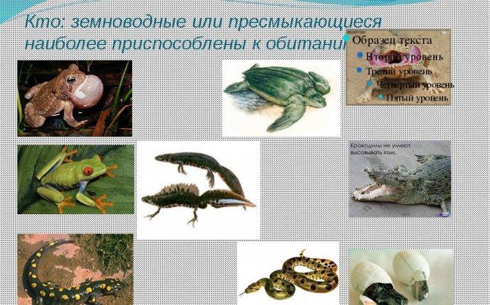 """Презентация по познанию мира на тему """"Земноводные и"""