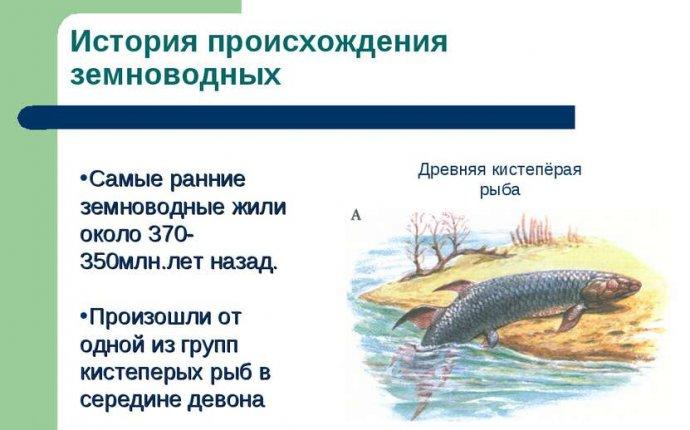 Презентация Размножение, развитие и происхождение земноводных