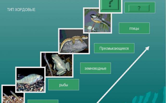 Презентация Тип Хордовые класс Млекопитающие - скачать бесплатно