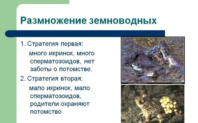 Размножение земноводных - Картинка 5592-11