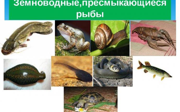 Рыбы, земноводные, пресмыкающиеся