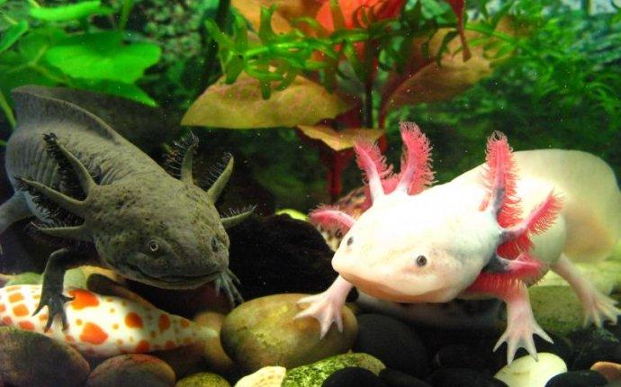 Самые необычные животные в мире