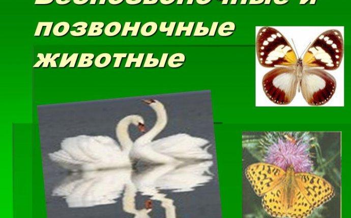 Скачать презентация на тему позвоночные животные - crb1.ru