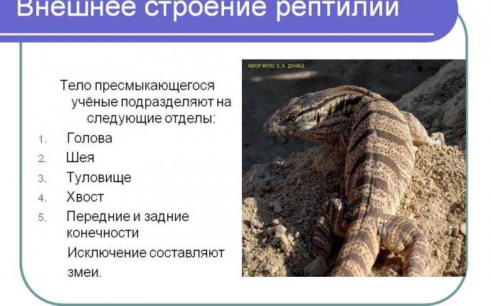 Внешнее строение рептилий - Презентация 5547-7